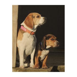 Impression Sur Bois Grande soeur de beagle et beagle de petit frère