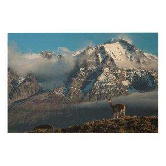 Impression Sur Bois Guanaco dans les montagnes   Chili