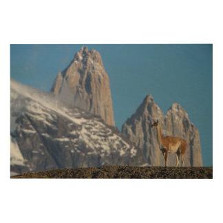 Impression Sur Bois Guanaco en Torres del Paine   Chili