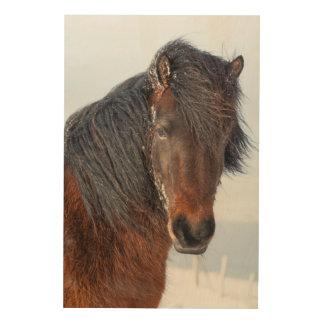 Impression Sur Bois Headshot islandais majestueux de cheval