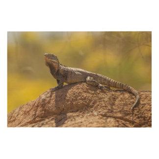 Impression Sur Bois iguane Épineux-coupé la queue sur la roche