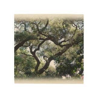 Impression Sur Bois Image de couleur des chênes de la Californie sur