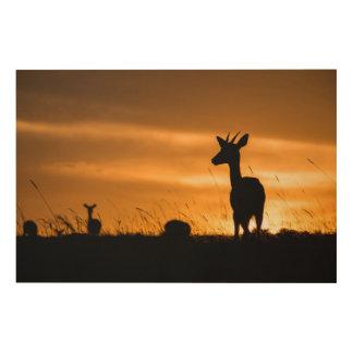 Impression Sur Bois Impala au coucher du soleil