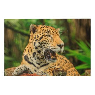 Impression Sur Bois Jaguar montre ses dents, Belize