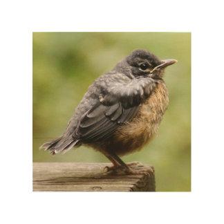 Impression Sur Bois Jeune Robin