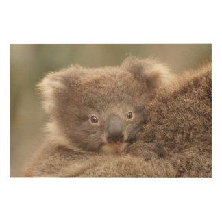 Impression Sur Bois Koala de bébé