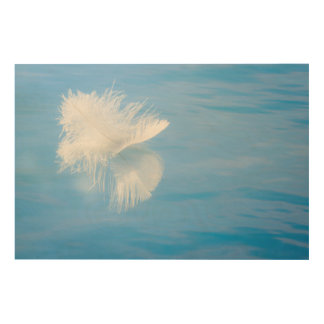 Impression Sur Bois La plume blanche réfléchit sur l'eau | Seabeck, WA