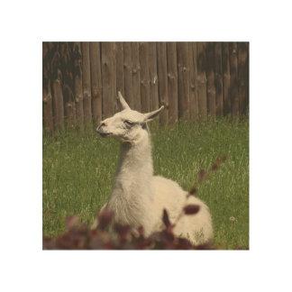 Impression Sur Bois Lama blanc