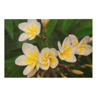 Impression Sur Bois Le Plumeria fleurit le plan rapproché, Hawaï