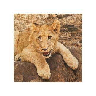 Impression Sur Bois Le tigre CUB prend le reniflard sur une roche