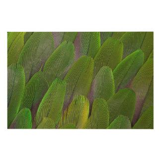 Impression Sur Bois Les plumes vertes de perroquet se ferment