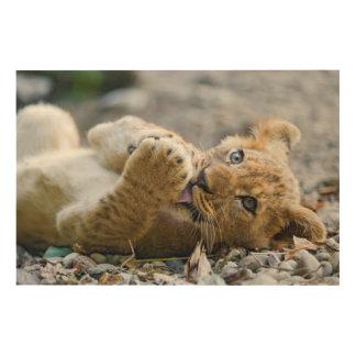 Impression Sur Bois Lion CUB 2