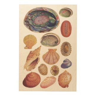 Impression Sur Bois Livre vintage des coquillages