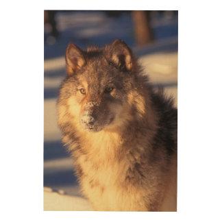 Impression Sur Bois Loup gris dans la neige