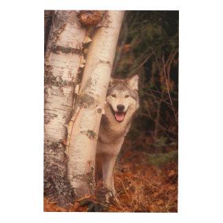 Impression Sur Bois Loup gris derrière un arbre