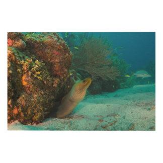 Impression Sur Bois Moray vert en récif