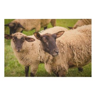 Impression Sur Bois Moutons de la Normandie | France
