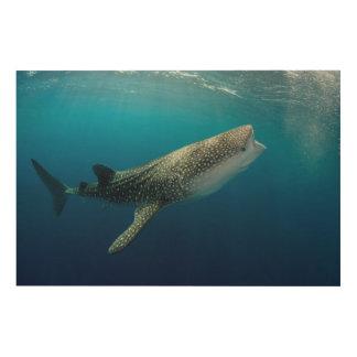 Impression Sur Bois Natation de requin de baleine