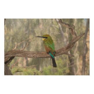 Impression Sur Bois Oiseau d'abeille-mangeur d'arc-en-ciel, Australie