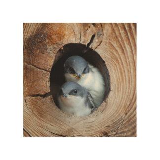 Impression Sur Bois Oiseaux de bébé