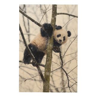 Impression Sur Bois Panda de bébé dans l'arbre