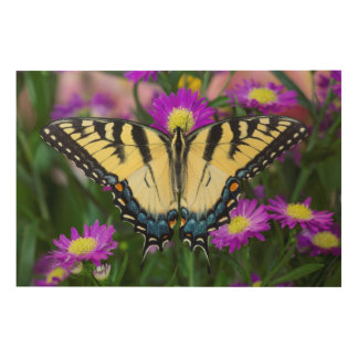 Impression Sur Bois Papillon de machaon sur la marguerite