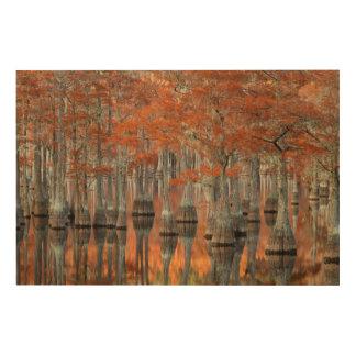 Impression Sur Bois Parc d'état des arbres de Cypress | George Smith,