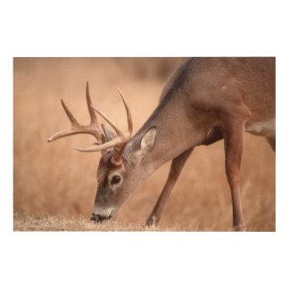 Impression Sur Bois Pâturage masculin de cerf de Virginie