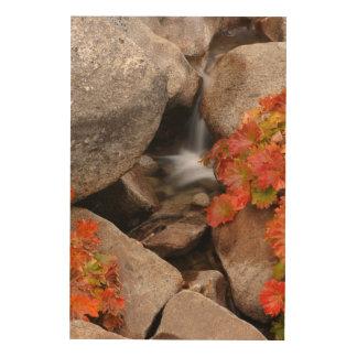 Impression Sur Bois Petite crique en automne, la Californie