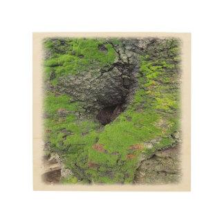 Impression Sur Bois Photo d'arbre sur le bois