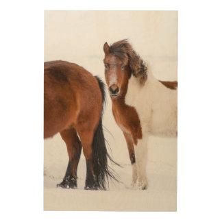 Impression Sur Bois Pinto a coloré le cheval islandais
