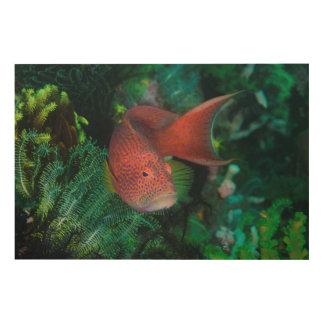 Impression Sur Bois Plan rapproché de la truite de corail