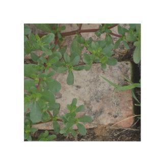 Impression Sur Bois Plante et brique (sur le bois ?)