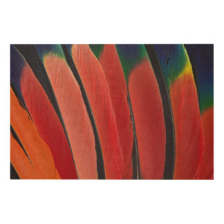 Impression Sur Bois Plumes rouges de perroquet d'Amazone