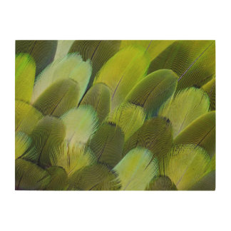 Impression Sur Bois Plumes vertes de perroquet d'Amazone