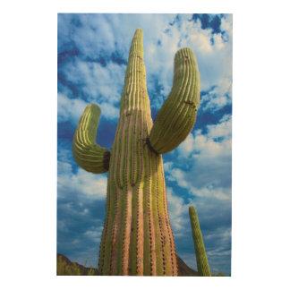 Impression Sur Bois Portrait de cactus de Saguaro, Arizona
