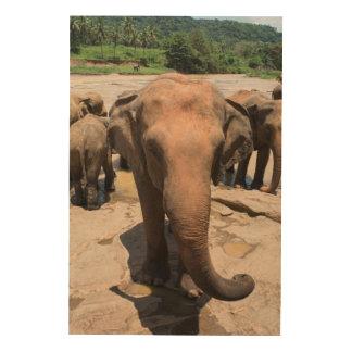 Impression Sur Bois Portrait de groupe d'éléphant, Sri Lanka
