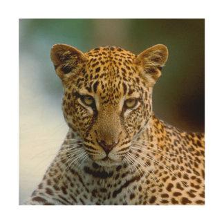 Impression Sur Bois Portrait de léopard