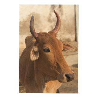 Impression Sur Bois Portrait de vache sacrée