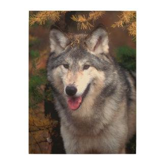Impression Sur Bois Portrait d'un loup gris