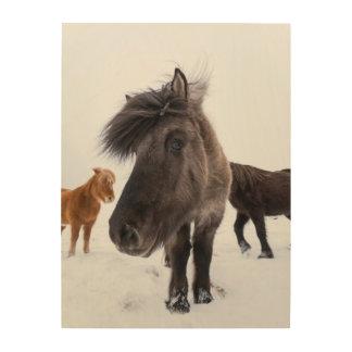 Impression Sur Bois Portrait islandais de cheval, Islande