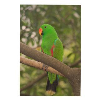 Impression Sur Bois Portrait vert de perroquet