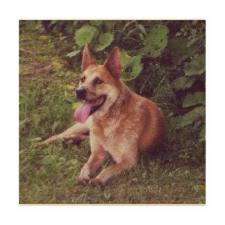 Impression Sur Bois pose rouge de chien australien de bétail