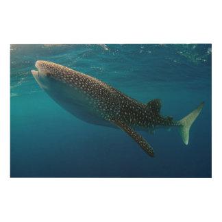 Impression Sur Bois Profil d'un requin de baleine, Indonésie