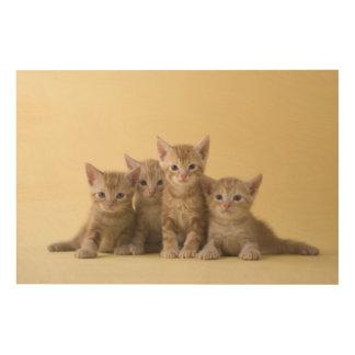 Impression Sur Bois Quatre chatons de Shorthair d'Américain