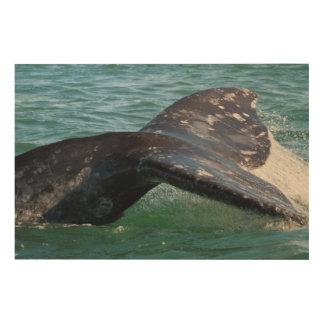 Impression Sur Bois Queue de baleine grise
