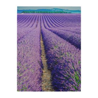 Impression Sur Bois Rangées de lavande, Provence, France