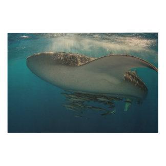 Impression Sur Bois Requin de baleine avec le Remora