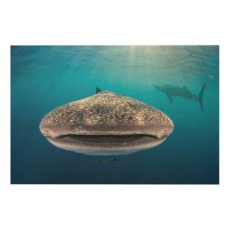 Impression Sur Bois Requin de baleine, vue de face, Indonésie