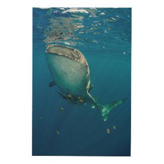 Impression Sur Bois Requin et poissons de baleine